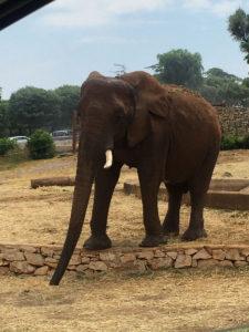 Zoo Safari: Gli Elefanti